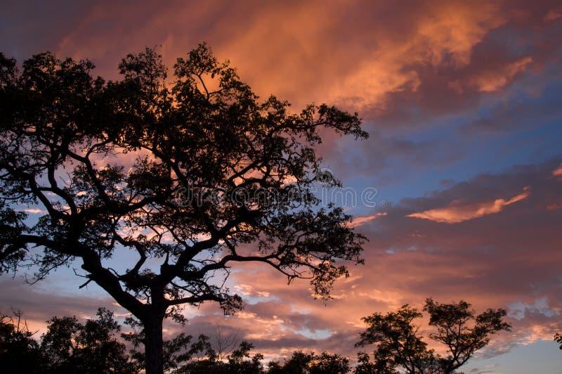 Soluppgång i Afrika royaltyfria foton