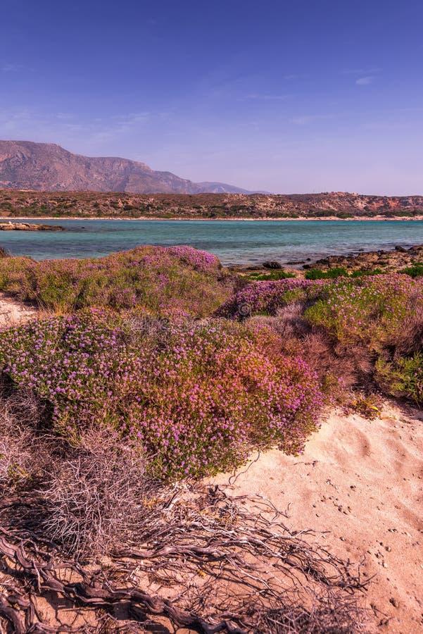 Soluppgång, i att blomma paradis av grekiska öar fotografering för bildbyråer