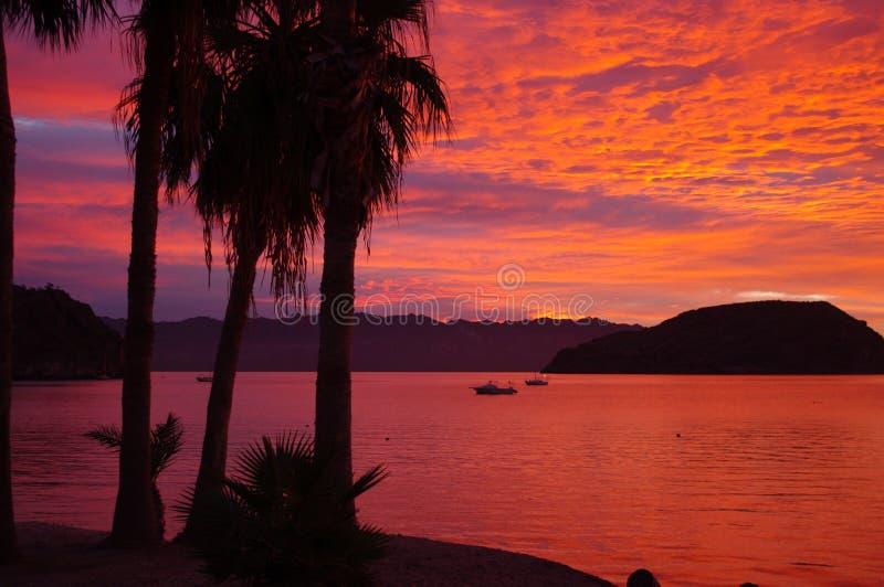 Soluppgång i Baja, prärievargfjärd royaltyfria bilder