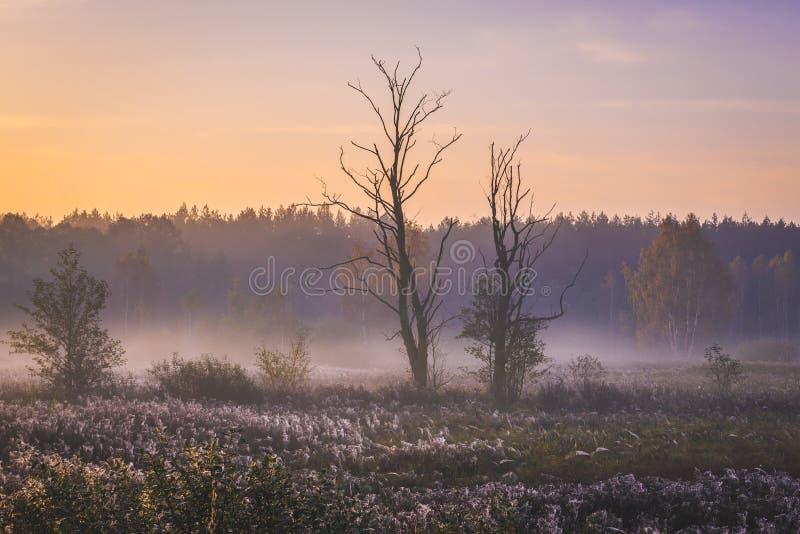 Soluppgång i den Kampinos skogen arkivfoto