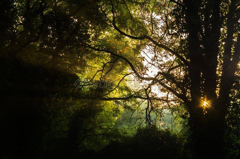 Soluppgång i den mystiska skogen arkivfoto