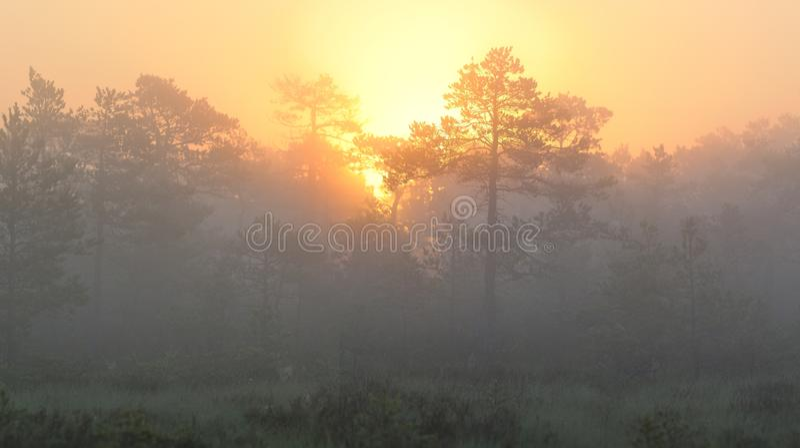 Soluppgång i dimmig myr arkivbilder