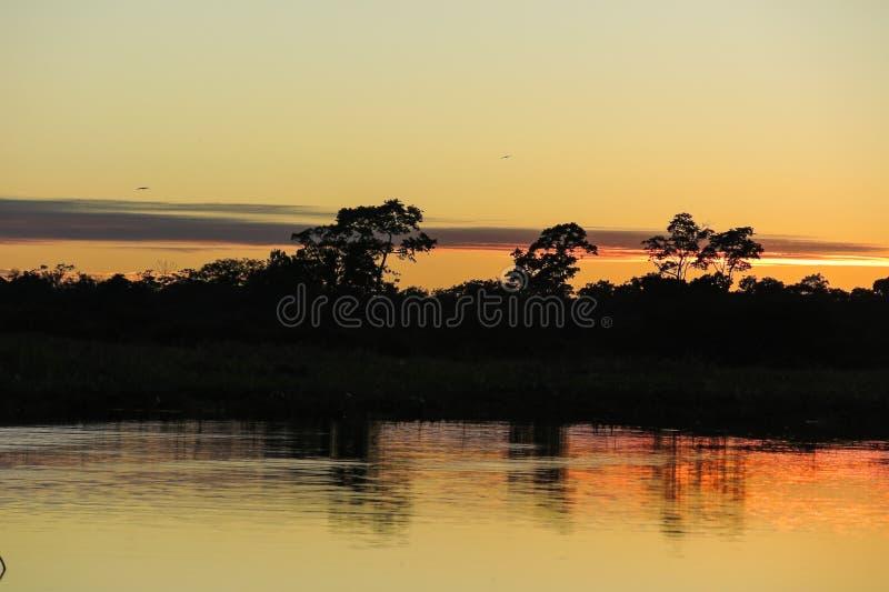 Soluppgång i djungeln arkivbild