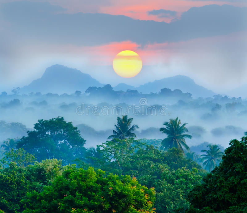 Soluppgång i djunglerna arkivfoton