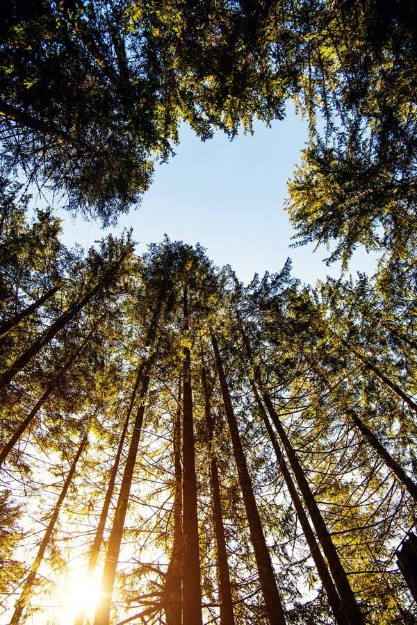 Soluppgång i en härlig skog i Carpathian berg, Ukraina, Europa Landskap av naturen med solljus Sk?nhet av naturbegreppet fotografering för bildbyråer