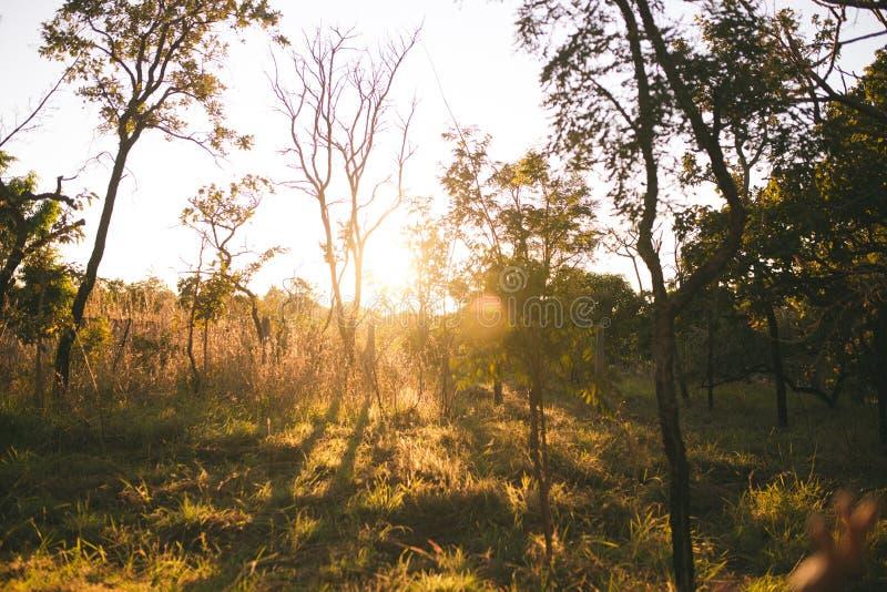 Soluppgång i en lantgård, Brasilien royaltyfri bild