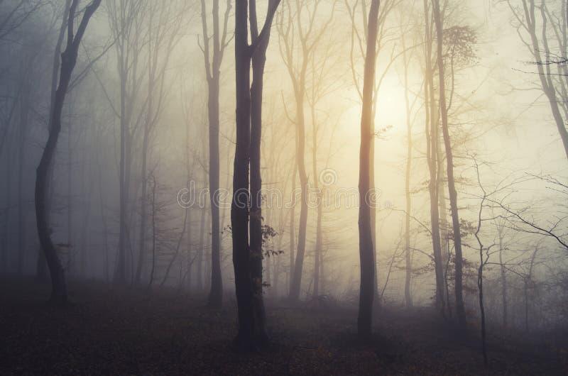 Soluppgång i en mystisk skog med dimma arkivfoton