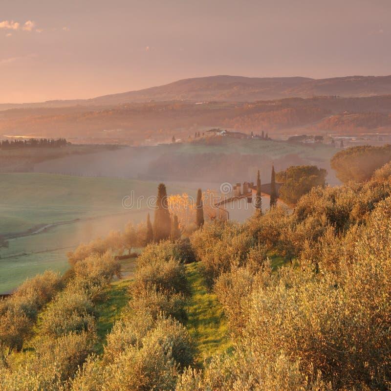 Soluppgång i härlig tuscan bygd fotografering för bildbyråer
