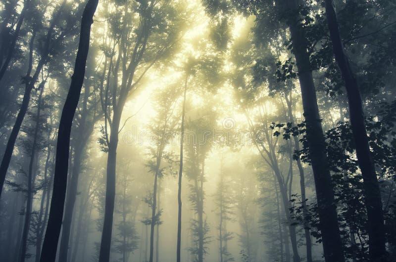 Soluppgång i magisk skog med mystisk dimma royaltyfri bild