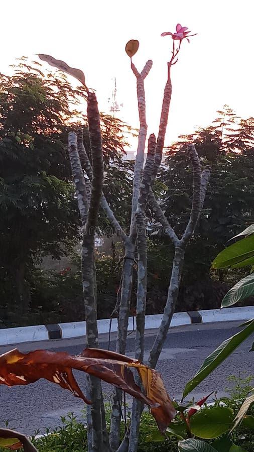 Soluppgång i morgonen royaltyfri bild