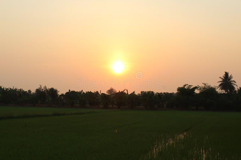 Soluppgång i morgonen i risfältet royaltyfri bild