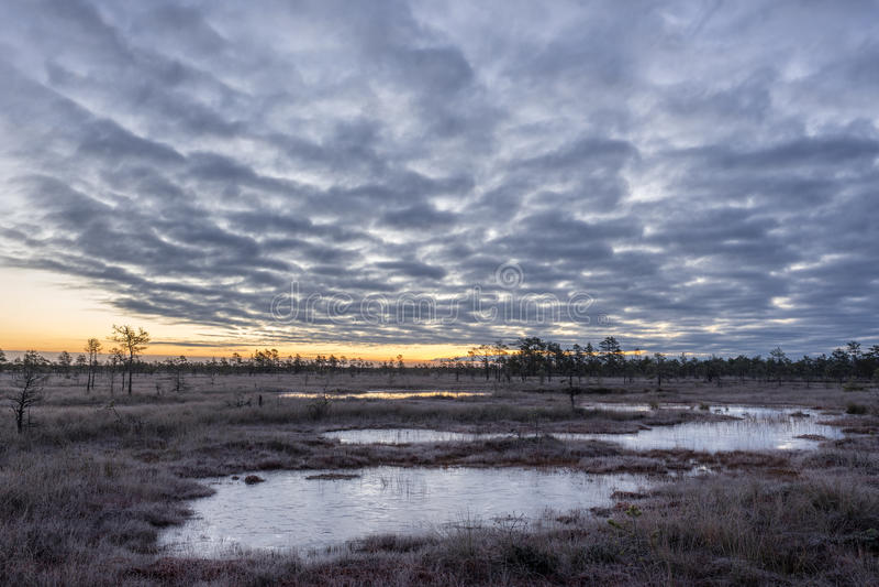 Soluppgång i myren Iskallt kallt träsk Frostig jordning Träsk sjö och natur Frysningtemperaturer i hed Muskeg naturlig miljö arkivfoto