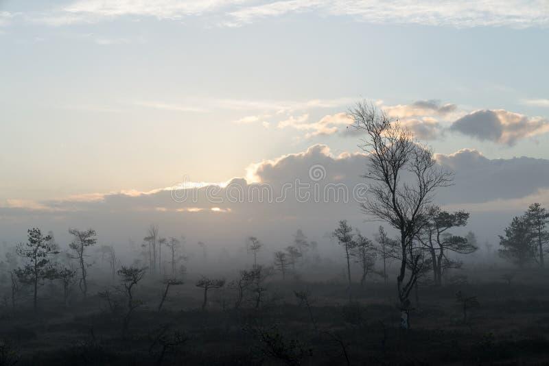 Soluppgång i myrlandskapet För naturmiljö för dimmigt träsk, sjöar bakgrund arkivfoto