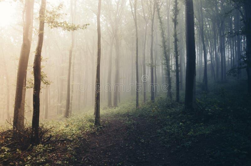 Soluppgång i mystiska dimmiga trän royaltyfria bilder