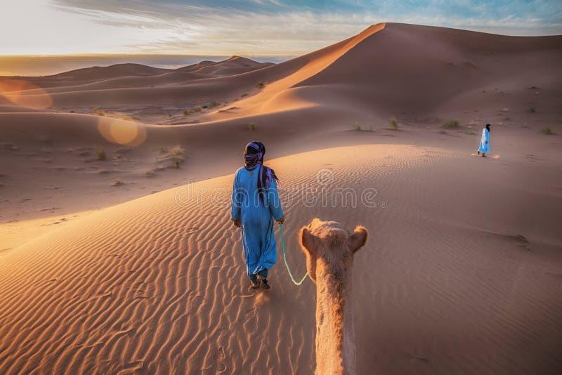 Soluppgång i Sahara Desert, som en kamel ledas till och med guld- sanddyn av två nomad- stammedlemmar royaltyfri foto