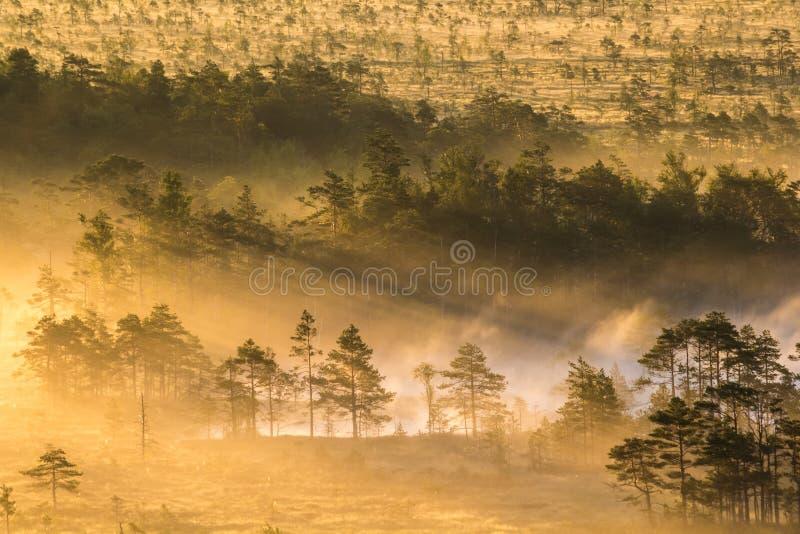 Soluppgång i träsket arkivbilder