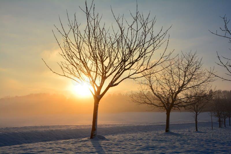 Soluppgång i vinter med träd arkivfoto