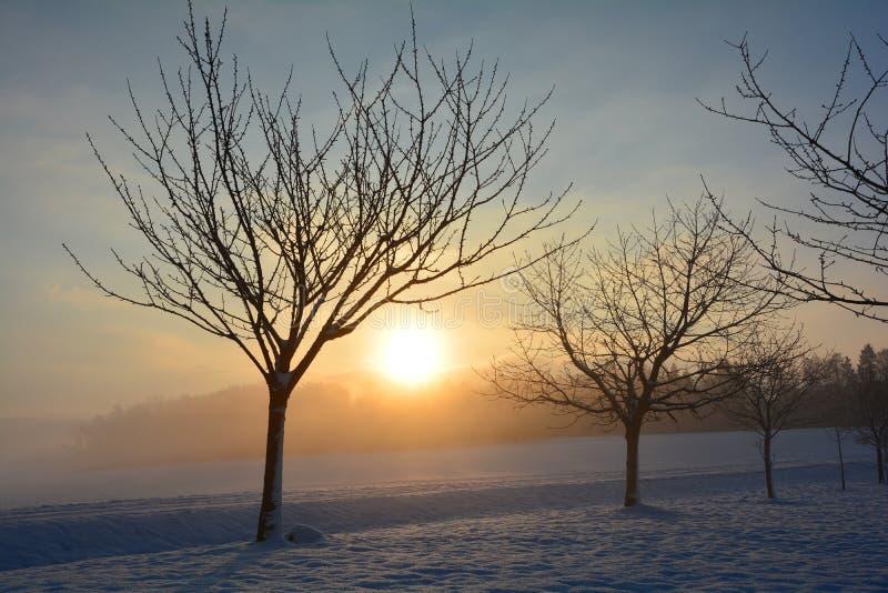 Soluppgång i vinter med träd royaltyfri foto