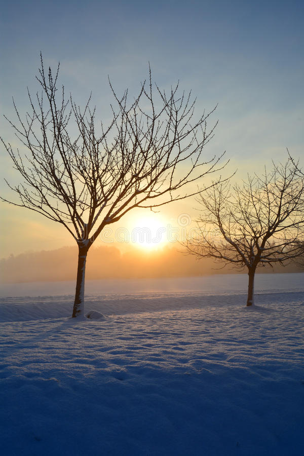 Soluppgång i vinter med träd royaltyfria foton