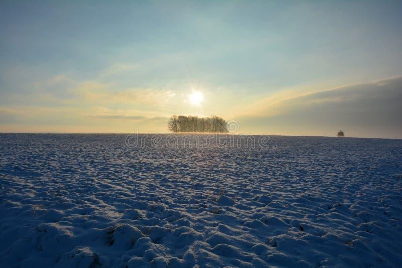 Soluppgång i vinter med träd och dimma arkivfoto