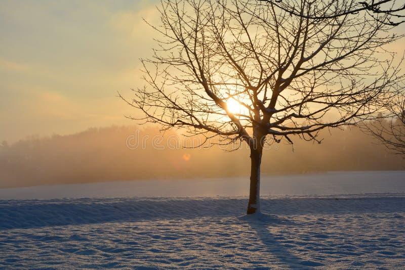 Soluppgång i vinter med trädet royaltyfria bilder