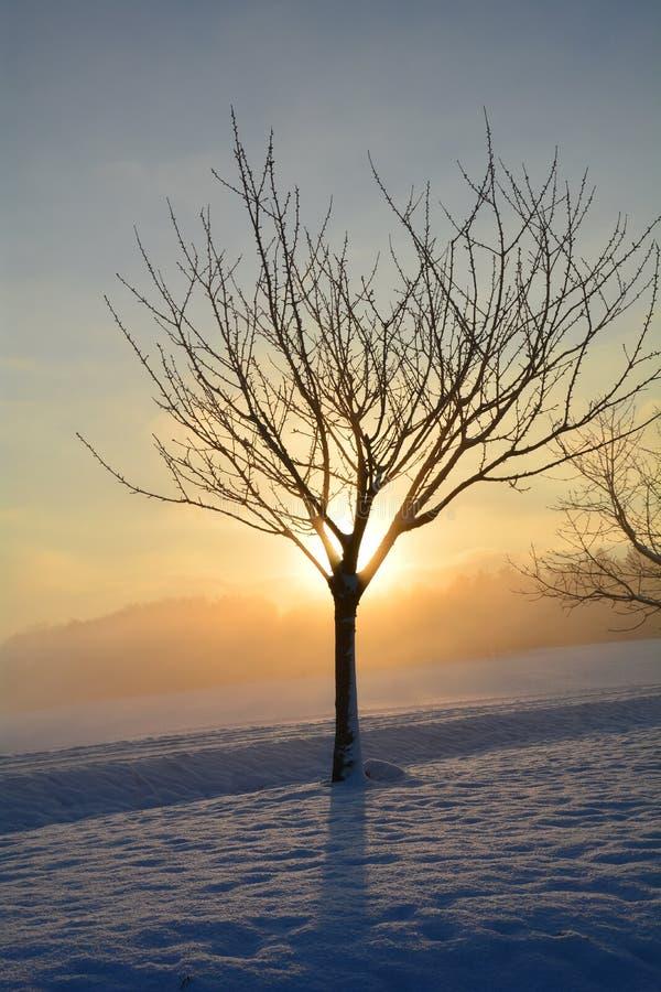 Soluppgång i vinter med trädet och dimma arkivfoto