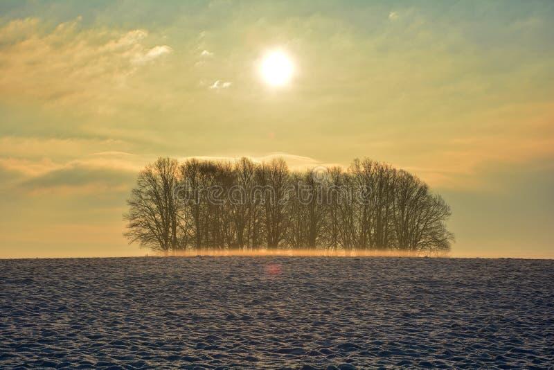 Soluppgång i vinter med trädet och dimma royaltyfria bilder