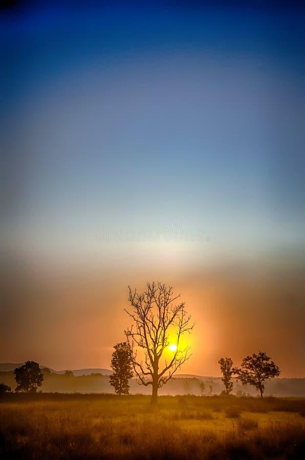 Soluppgång Kanha nationalpark, Indien royaltyfri foto