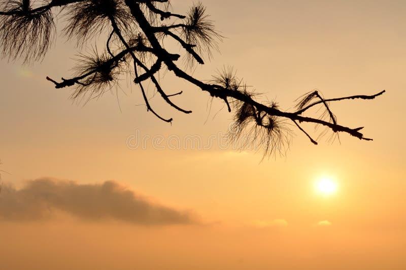 Soluppgång med den lone treesilhouetten arkivfoto