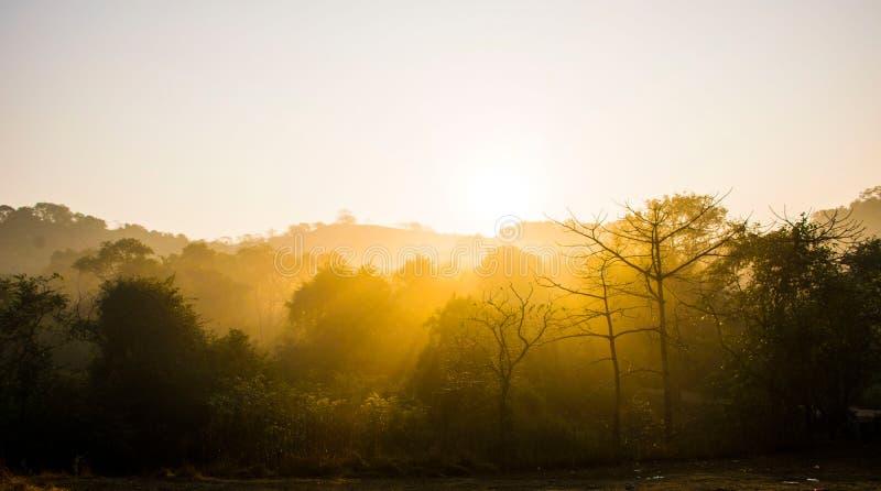 Soluppgång med solljusbortgång till och med träd royaltyfria bilder