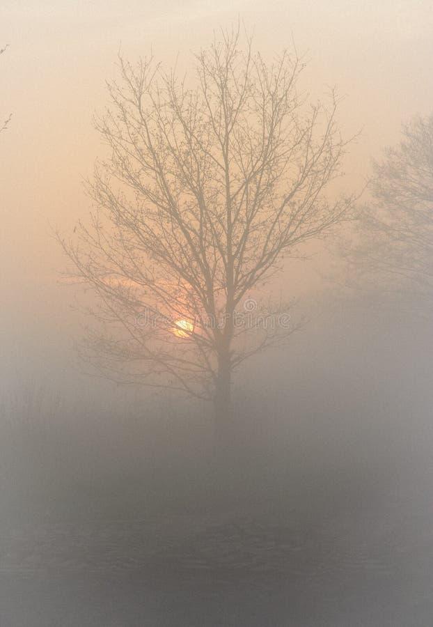 Soluppgång med trädet på mist royaltyfri foto