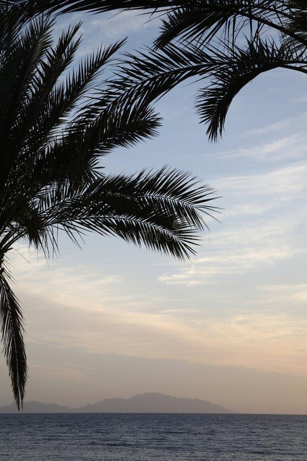 Soluppgång nära havet, palmträd arkivbild