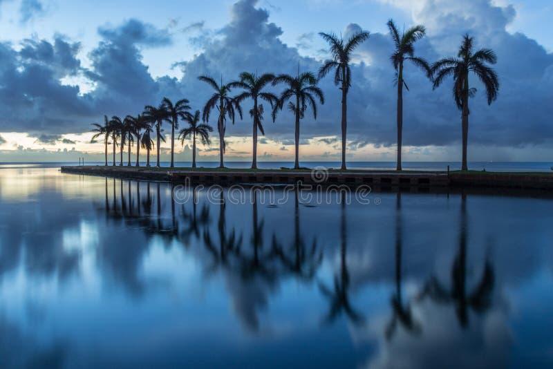 Soluppgång och palmträd arkivfoto