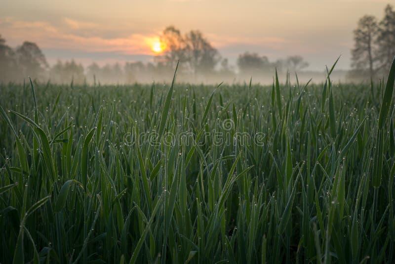 Soluppgång på äng fotografering för bildbyråer