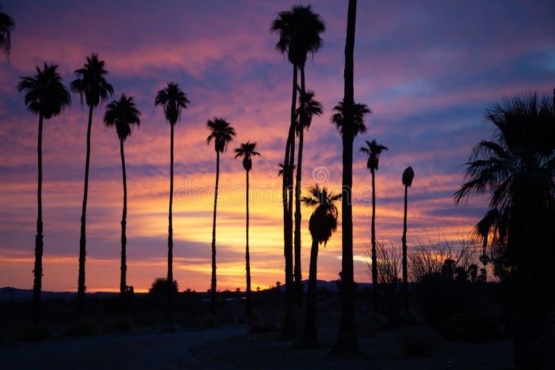 Soluppgång på Borrego Springs med palmträd royaltyfria foton