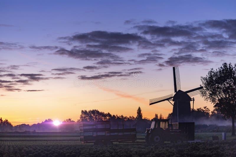 Soluppgång på den holländska väderkvarnen royaltyfri foto