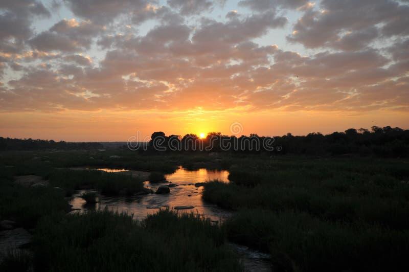 Soluppgång på den Kruger parken arkivbild
