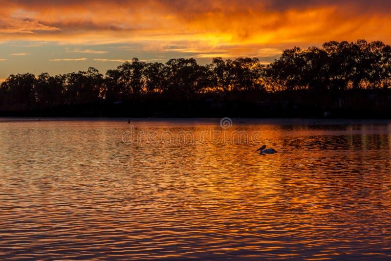 Soluppgång på den Mannum flodstranden, flod Murray South Australia med p arkivfoton