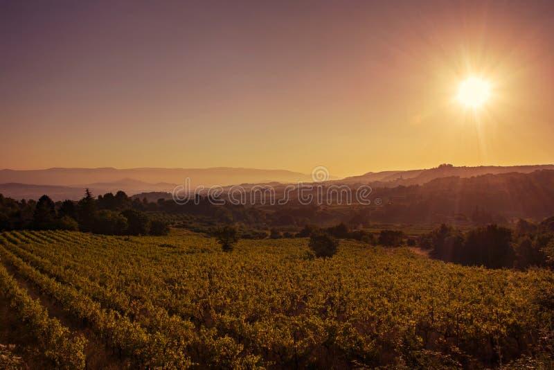 Soluppgång på den Provencal vingården arkivfoto