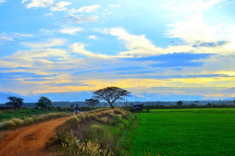 Soluppgång på det Kerala risfältfältet arkivfoton