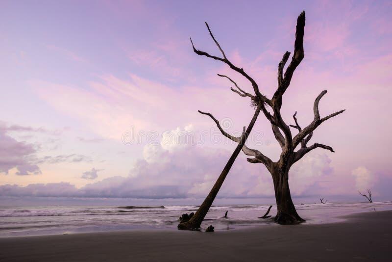 Soluppgång på en stillhet och tömmer stranden med drivved och reflexioner fotografering för bildbyråer