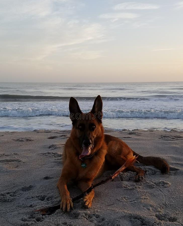 Soluppgång på en strand royaltyfri foto