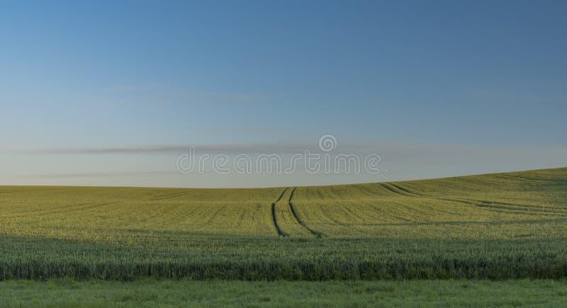 Soluppgång på fält i solig morgon för vår arkivfoto