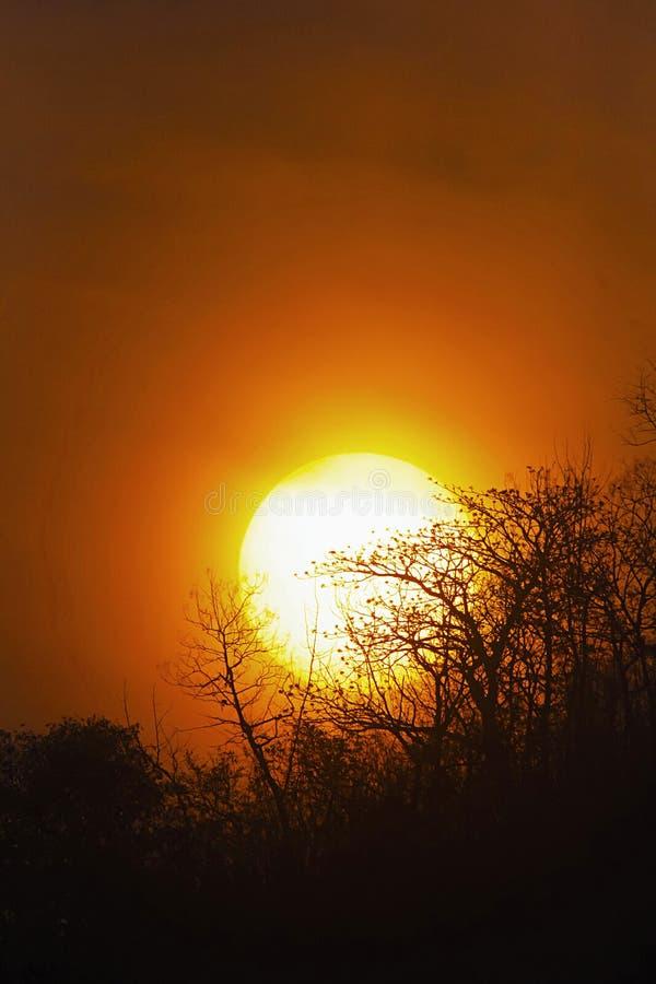 Soluppgång på Panna, Panna Tiger Reserve, Madhya Pradesh, Indien royaltyfri foto