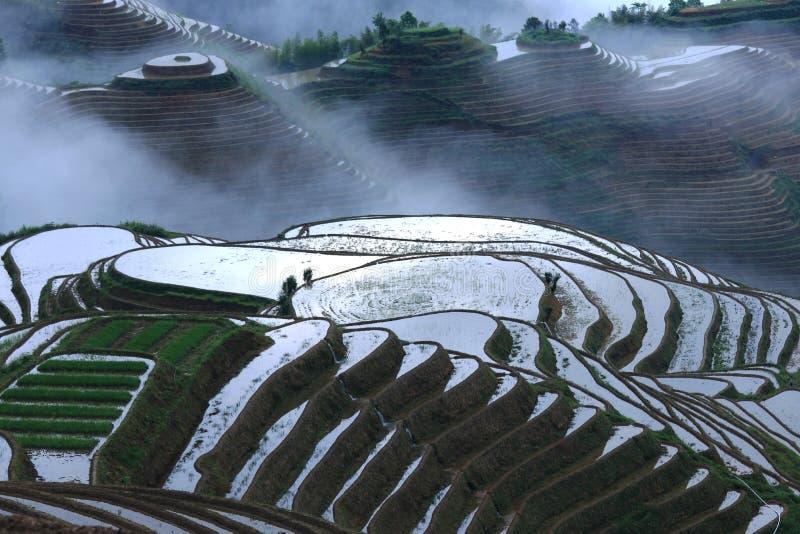 Soluppgång på risterrasser i Guilin Kina arkivbild