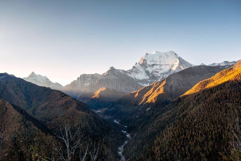 Soluppgång på snöberget med pinjeskogen i höst royaltyfri foto