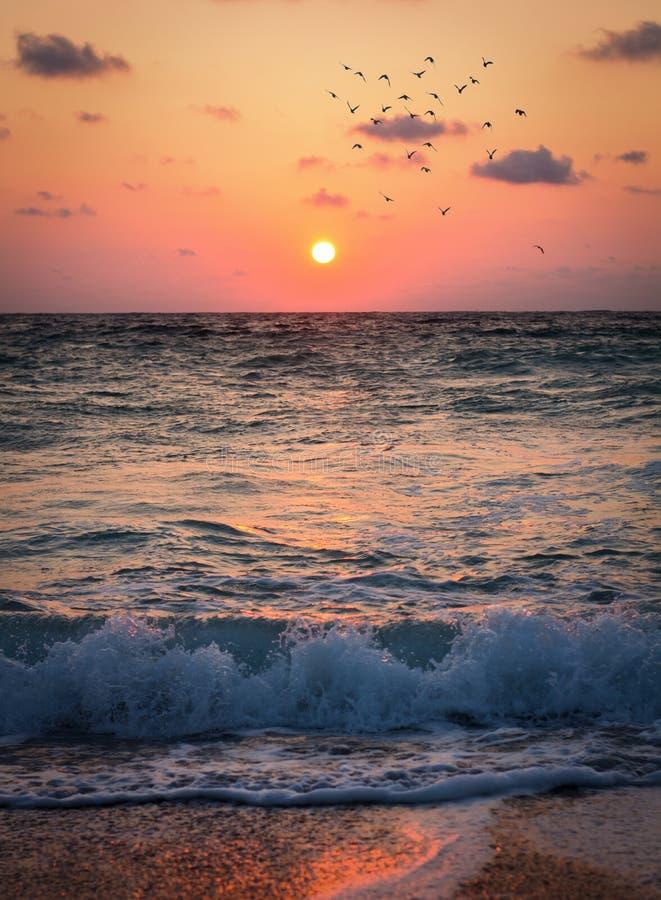 Soluppgång på stranden i Costinesti arkivbilder