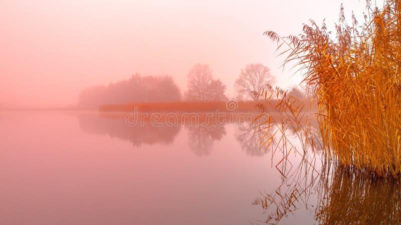 Soluppgång på vattnet Trädreflexion i dammet på dimmig morgon Orange mood arkivbilder