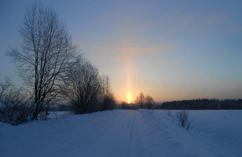 Soluppgång Treesfält och snow Enkla snöig däckspår - stående arkivfoto
