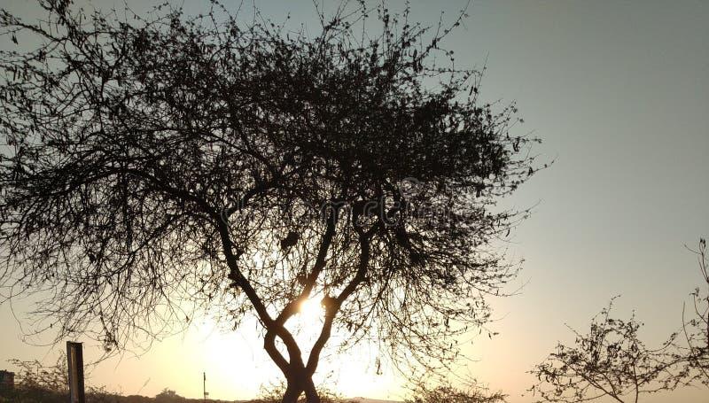 Soluppgångar bak trädet arkivfoton